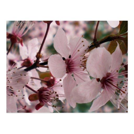 Flores dichosos tarjetas postales