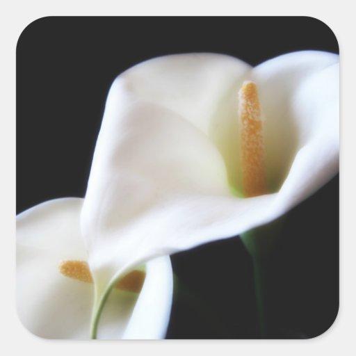 Flores elegantes 14 de la cala pegatina cuadrada