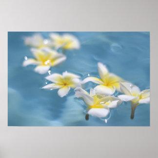 Flores en agua póster