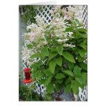 Flores en alimentador del enrejado y del colibrí tarjetas