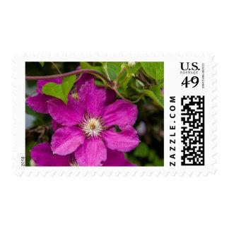 Flores en Apple Haus de Robinette y el granero del Sellos Postales
