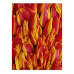 Flores en el flotador que celebra el día de la postal