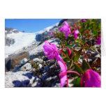 Flores en el foso de Gilkey (espacio en blanco Felicitaciones