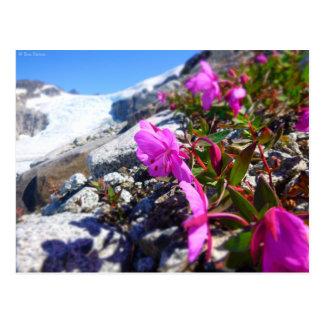 Flores en el foso de Gilkey Postal
