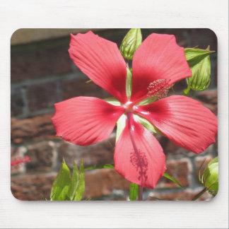 Flores en el palacio de Tryon Alfombrillas De Ratones