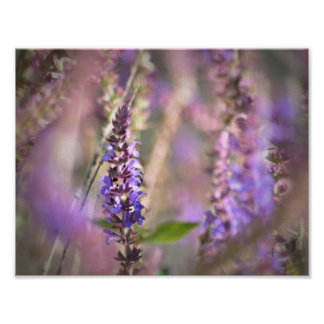 Flores en el viento póster