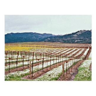 Flores en el viñedo, valle de Alexander, Californi Postales