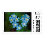 Flores en forma de corazón de la nomeolvides sellos postales