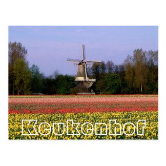 Flores en Keukenhof, el winmill y los bulbfields Postal