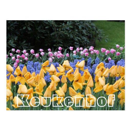 Flores en Keukenhof, fronteras de los tulipanes Tarjeta Postal