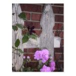 Flores en la cerca tarjeta postal