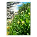 Flores en la ensenada de Tamarama Felicitacion