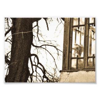 Flores en la impresión vieja de la foto de la casa fotografías