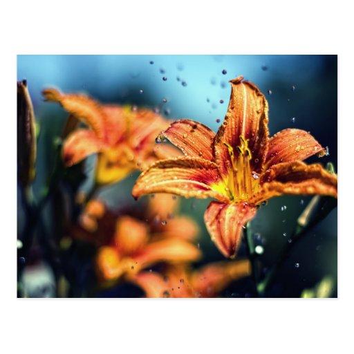 Flores en la lluvia postales
