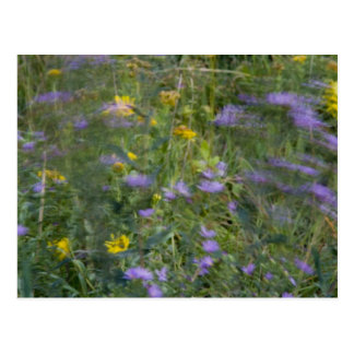 Flores en la postal del viento