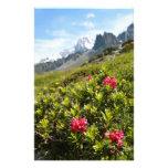 ¡Flores en las montañas - hermosas! Papelería