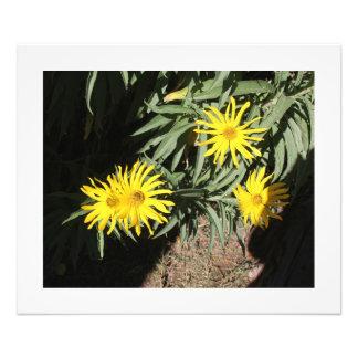 """Flores en mi hierbas """"Flowers in my Weeds"""" Art Photo"""
