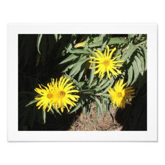 """Flores en mi hierbas """"Flowers in my Weeds"""" Photographic Print"""