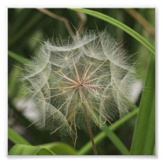"""Flores en mi hierbas """"Flowers in my Weeds"""" Photo"""