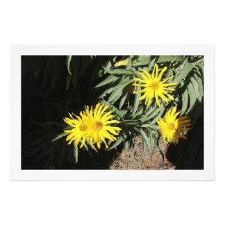 """Flores en mi hierbas """"Flowers in my Weeds"""" Photo Art"""