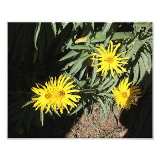 """Flores en mi hierbas """"Flowers in my Weeds"""" Photo Print"""