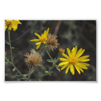 """Flores en mi hierbas """"Flowers in my Weeds"""" Photograph"""
