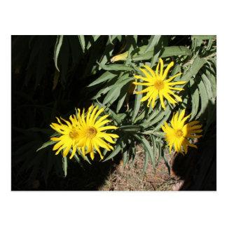 """Flores en mi hierbas """"Flowers in my Weeds"""" Postcard"""