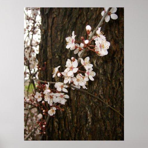 Flores en un árbol impresiones