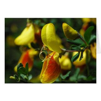 Flores escoceses de la escoba tarjeta de felicitación