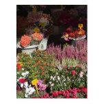 flores exhibidas para la venta en el de Campo Tarjetas Postales