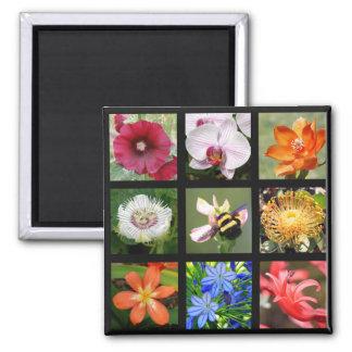 Flores exóticas de alrededor del mundo -- 9 cuadra imán de nevera