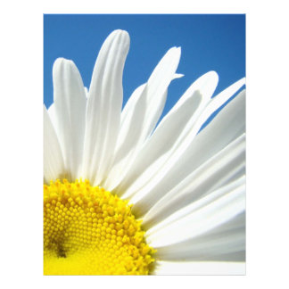 Flores florales de la margarita blanca del papel d plantillas de membrete