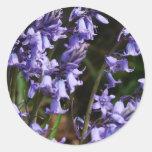 Flores florales de los Bluebells Etiqueta