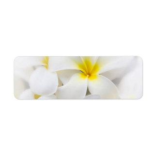Flores florales del Plumeria del Frangipani blanco Etiqueta De Remite