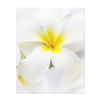 Flores florales del Plumeria del Frangipani blanco Impresión En Lienzo