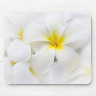 Flores florales del Plumeria del Frangipani blanco Alfombrillas De Ratones