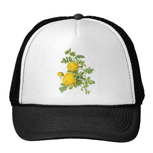 Flores florales del vintage, rosas amarillos por gorros bordados