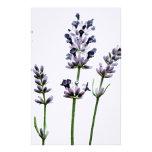 Flores florales púrpuras de Lavendar el | en color Papelería De Diseño