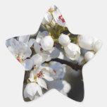 Flores florecientes de la pera de Bradford de la p Etiquetas