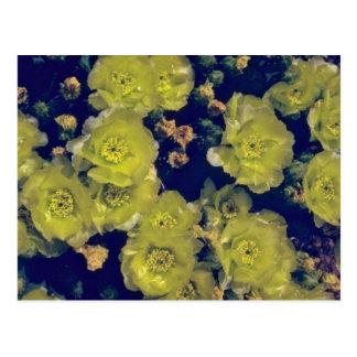 Flores florecientes del cactus de Beavertail Postales