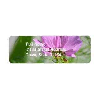 Flores florecientes del cosmos etiquetas de remite
