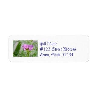 Flores florecientes del cosmos etiqueta de remite