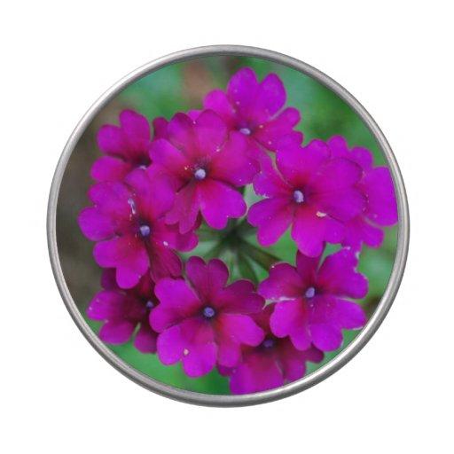 Flores florecientes del heliótropo latas de dulces