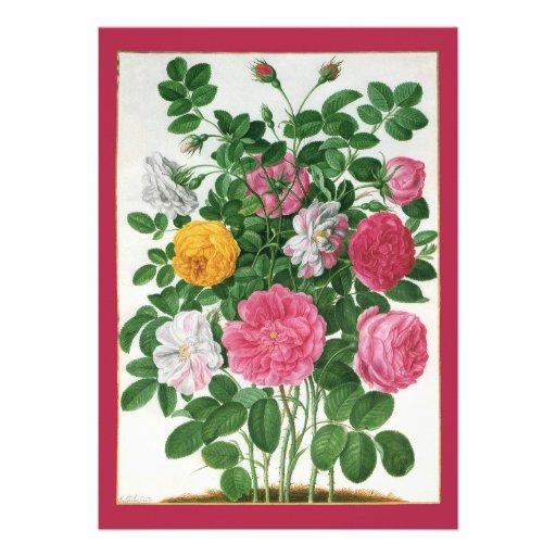Flores florecientes del vintage, rosas del jardín  comunicado personal
