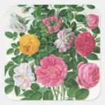 Flores florecientes del vintage, rosas del jardín pegatina cuadrada