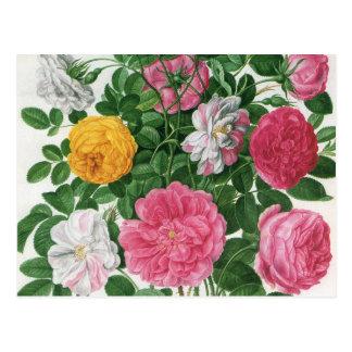 Flores florecientes del vintage, rosas del jardín postal