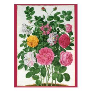 Flores florecientes del vintage rosas del jardín postal