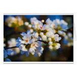 Flores florecientes pintados de la pera de Bradfor Tarjetas