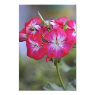 Flores flores fotografia