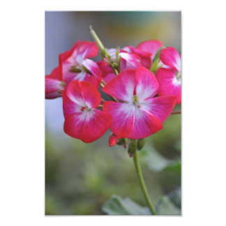 Flores, Flowers Photo Print